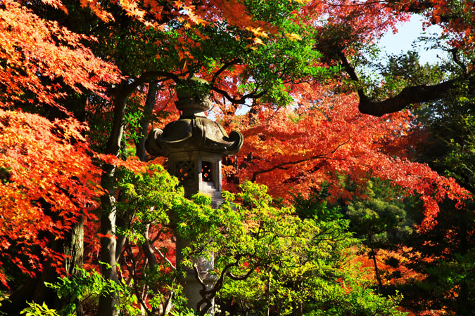 旧古河庭園の紅葉1_a0263109_13472996.jpg