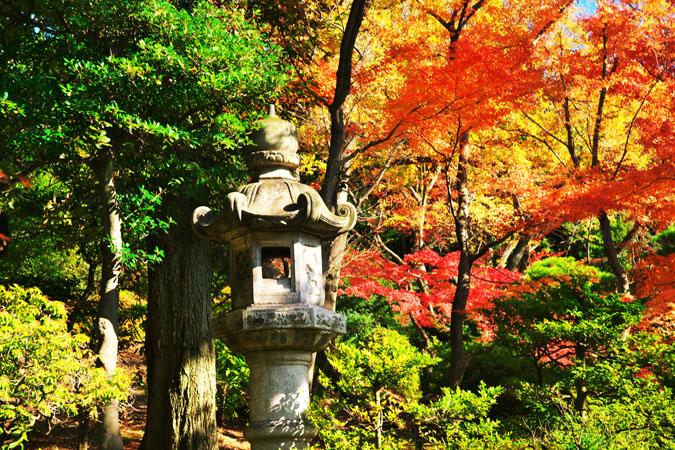 旧古河庭園の紅葉1_a0263109_13473053.jpg