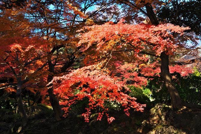 旧古河庭園の紅葉1_a0263109_13473220.jpg
