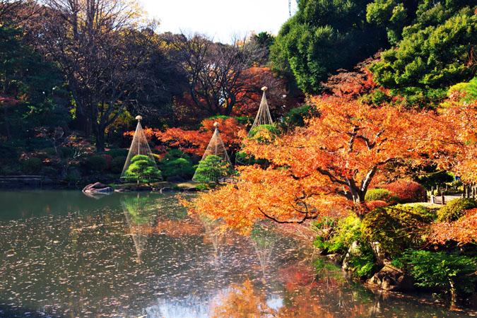 旧古河庭園の紅葉1_a0263109_13473449.jpg