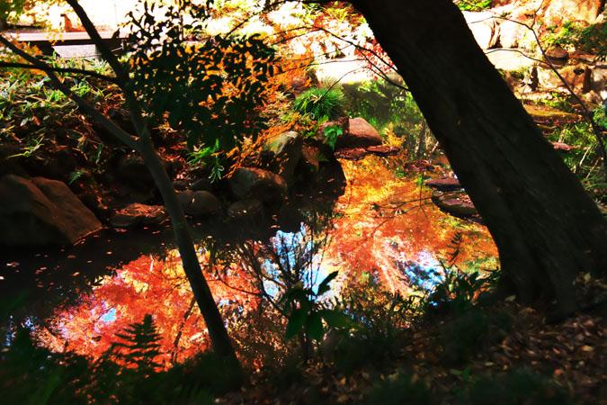 旧古河庭園の紅葉1_a0263109_13473760.jpg