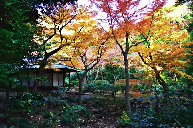 旧古河庭園の紅葉1_a0263109_13484071.jpg