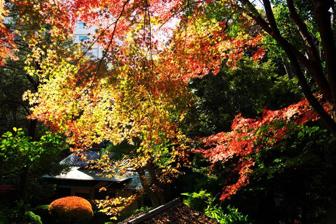 旧古河庭園の紅葉1_a0263109_13494440.jpg