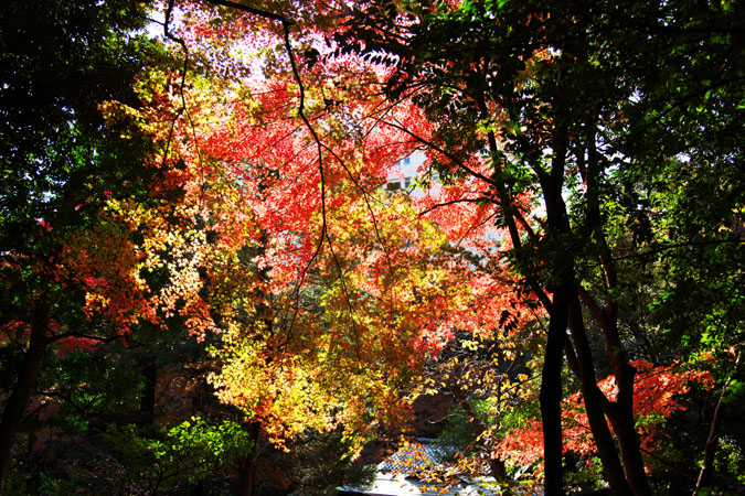 旧古河庭園の紅葉1_a0263109_13515113.jpg