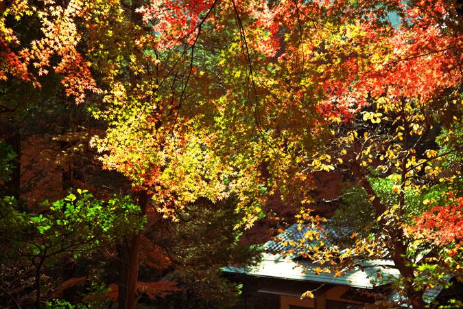 旧古河庭園の紅葉1_a0263109_13523927.jpg