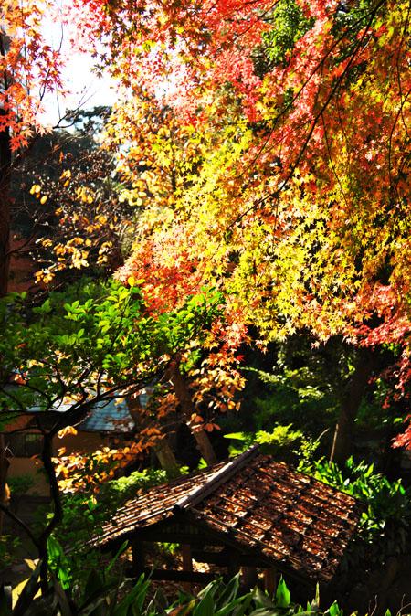 旧古河庭園の紅葉1_a0263109_13572552.jpg
