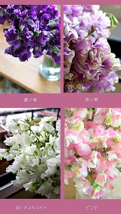 春の予約限定頒布会 スイートピー 2020_a0085317_1531391.jpg