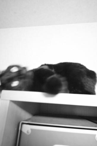 20160420 #blackcat #黒猫_d0176130_2259293.jpg