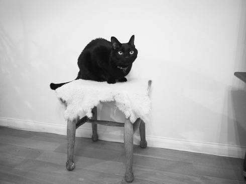 20160430 #黒猫 #猫_d0176130_2313723.jpg