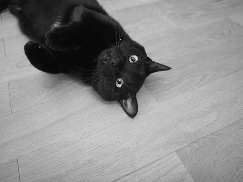 20160510 #cat #猫_d0176130_2342316.jpg
