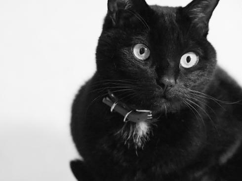 20160520 #黒猫_d0176130_2362427.jpg