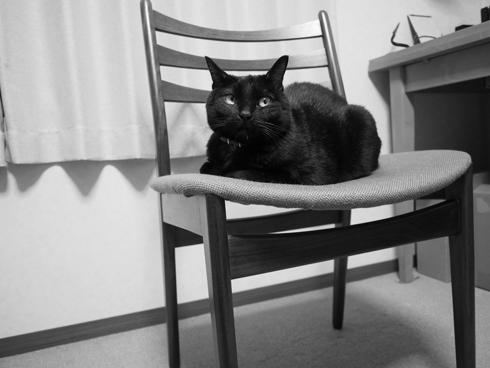 20160530 #黒猫 #猫_d0176130_2392153.jpg