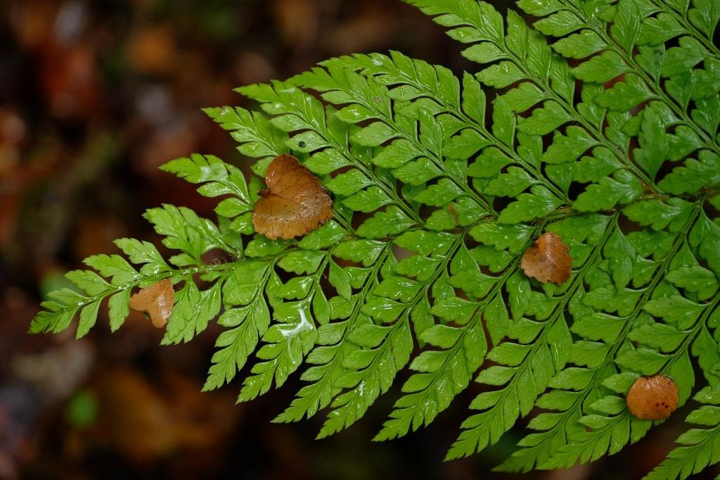タスマニアの森の奥_f0050534_22503105.jpg