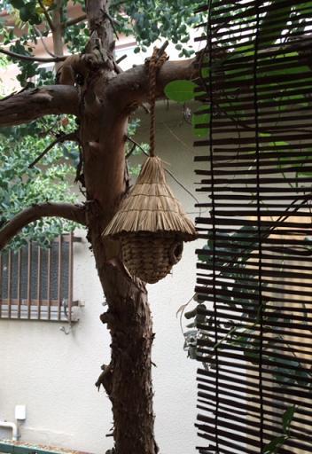 メジロが庭に_c0133854_20564076.jpg