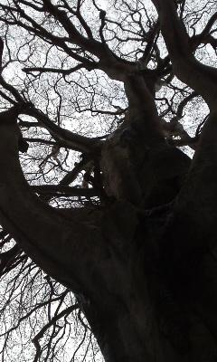 ブナの巨木に挨拶_e0036983_17135065.jpg