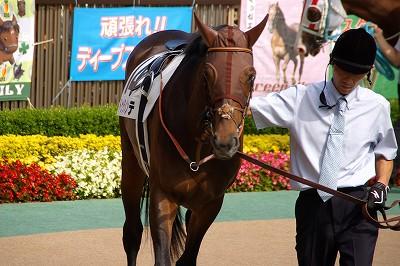 2015年度JRA賞発表、年度代表馬はモーリス _b0015386_2175931.jpg