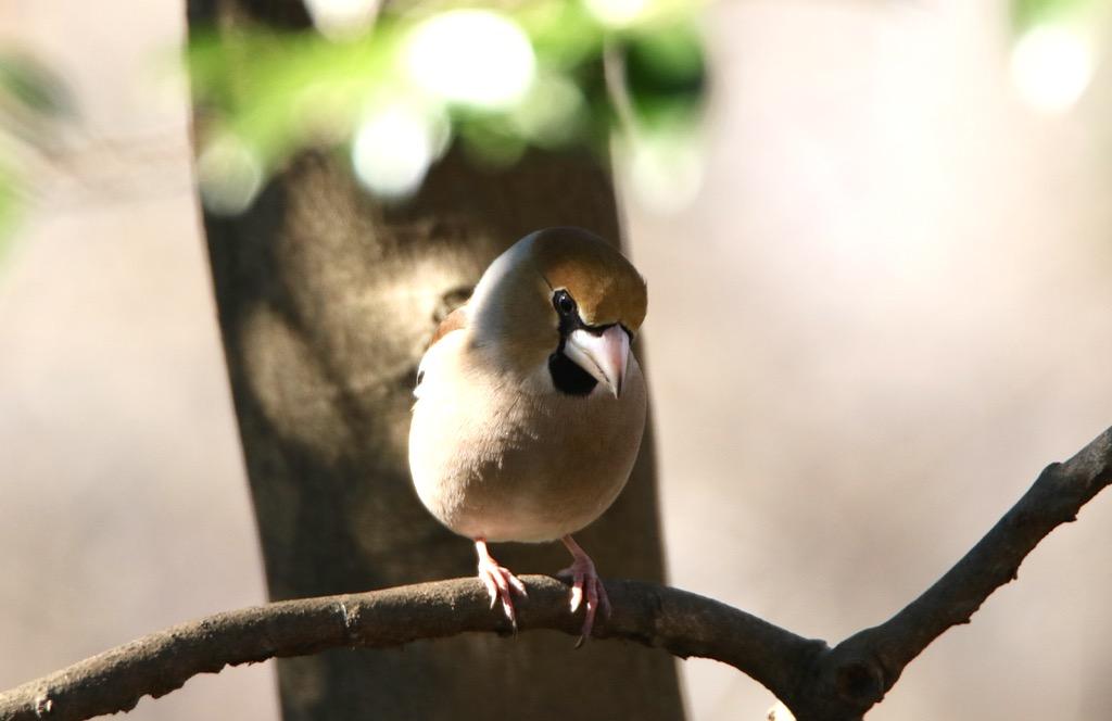 お正月早々のトリはシメ_d0148902_20332912.jpg