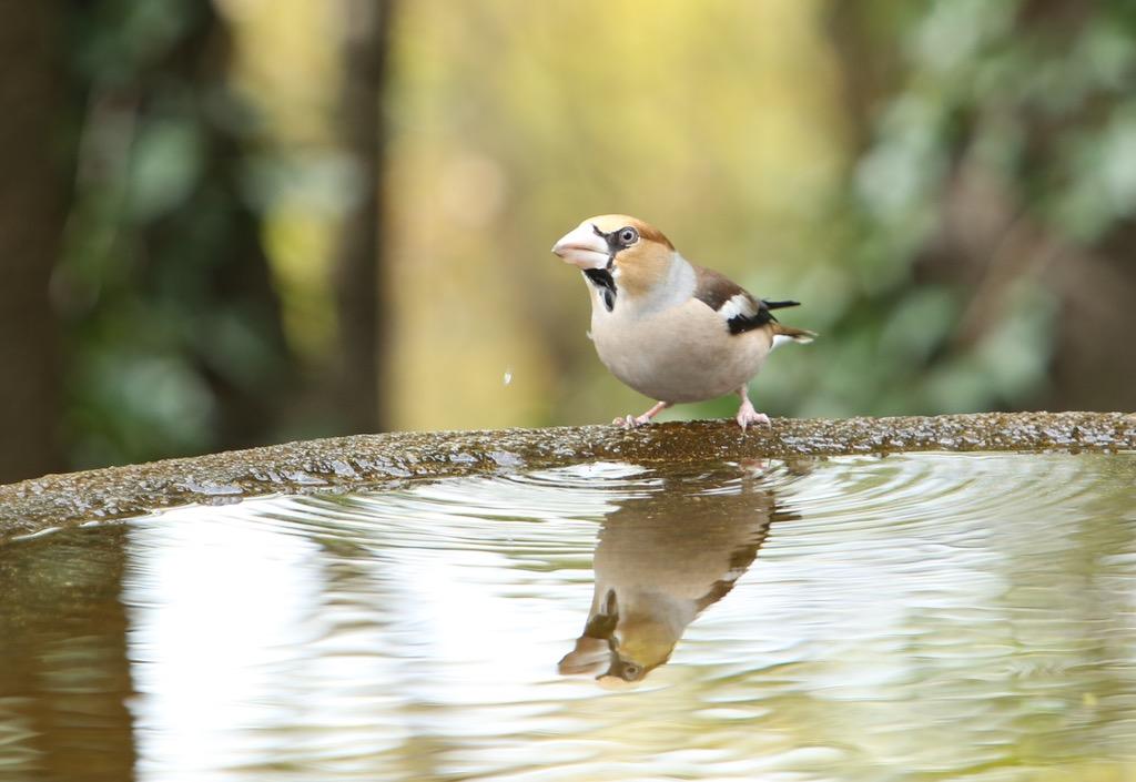 お正月早々のトリはシメ_d0148902_2034458.jpg