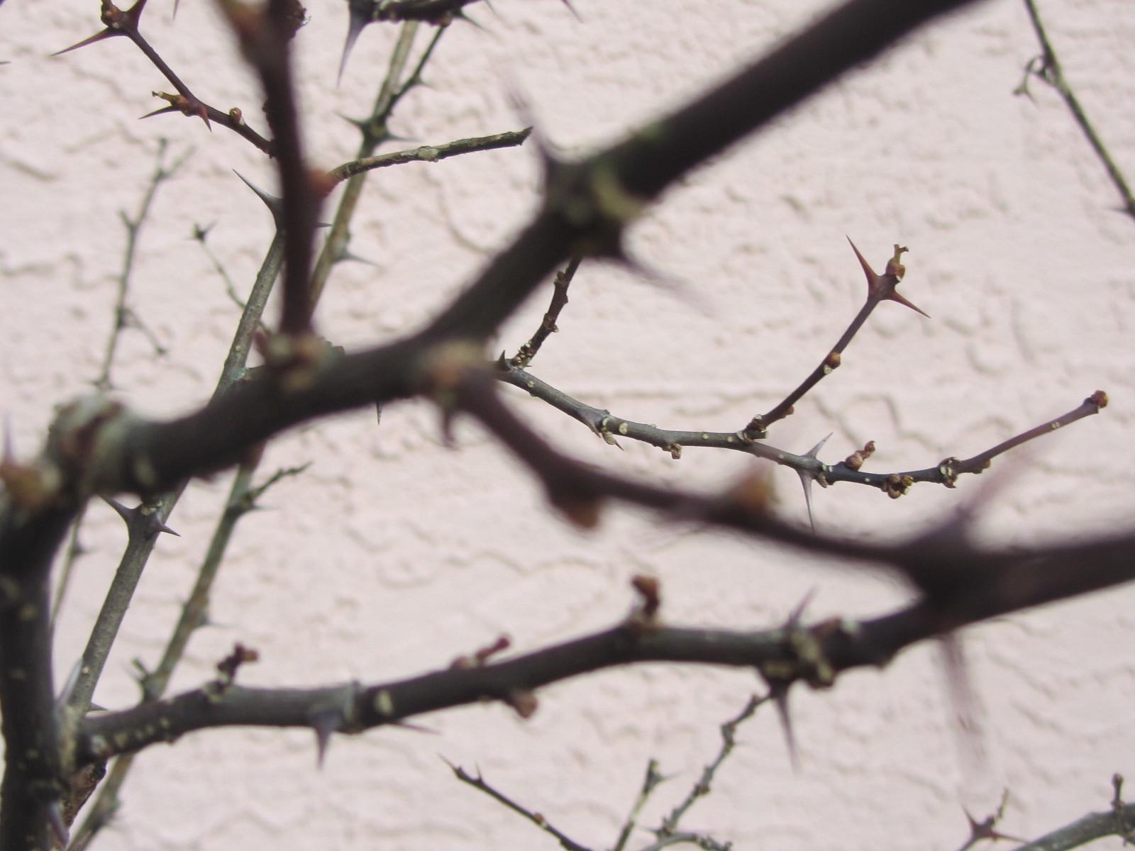 春の兆し_a0173527_09271050.jpg