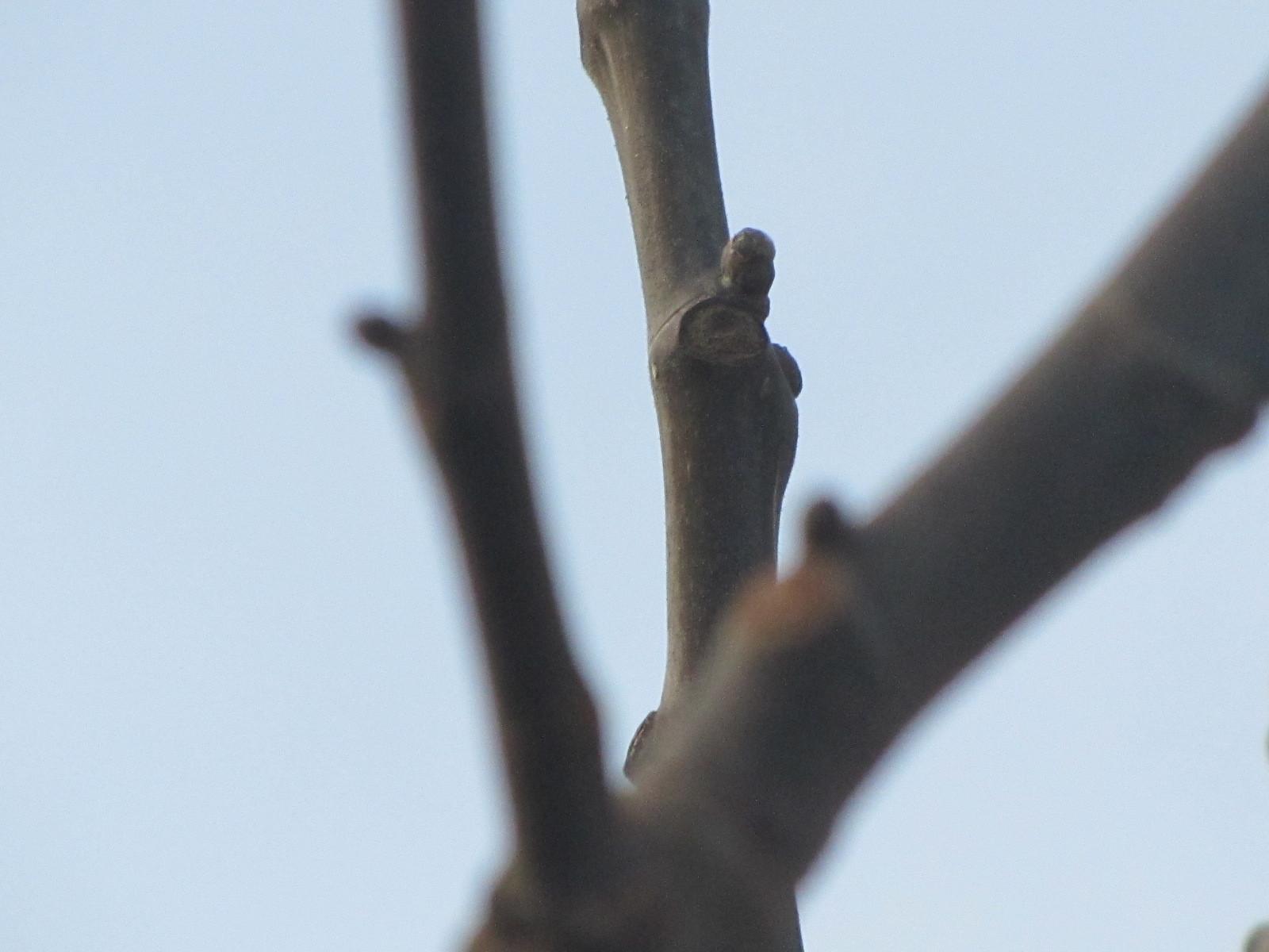 春の兆し_a0173527_09274125.jpg
