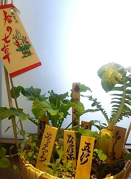 若菜迎え。。。初春の七草粥で 無病息災。。。春の 七草 ☆..。.゚。*・。♡ _a0053662_11191788.jpg