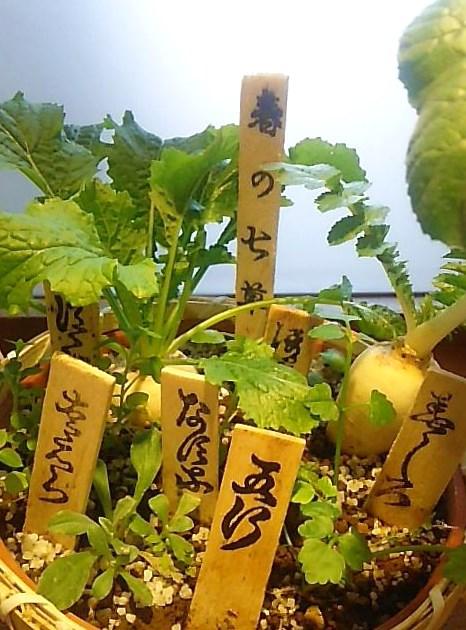 若菜迎え。。。初春の七草粥で 無病息災。。。春の 七草 ☆..。.゚。*・。♡ _a0053662_1125687.jpg