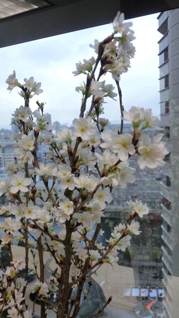 藤田八束と桜@世界平和を願って、春を呼ぶ桜・・・啓翁桜(けいおうさくら)が可愛く咲いています_d0181492_20380994.jpg