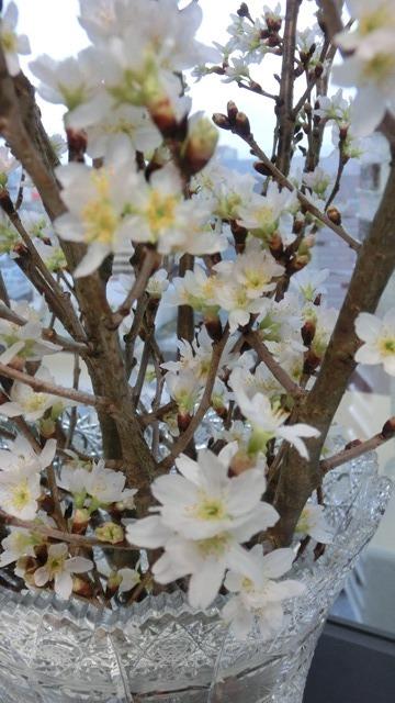 藤田八束と桜@世界平和を願って、春を呼ぶ桜・・・啓翁桜(けいおうさくら)が可愛く咲いています_d0181492_20384901.jpg