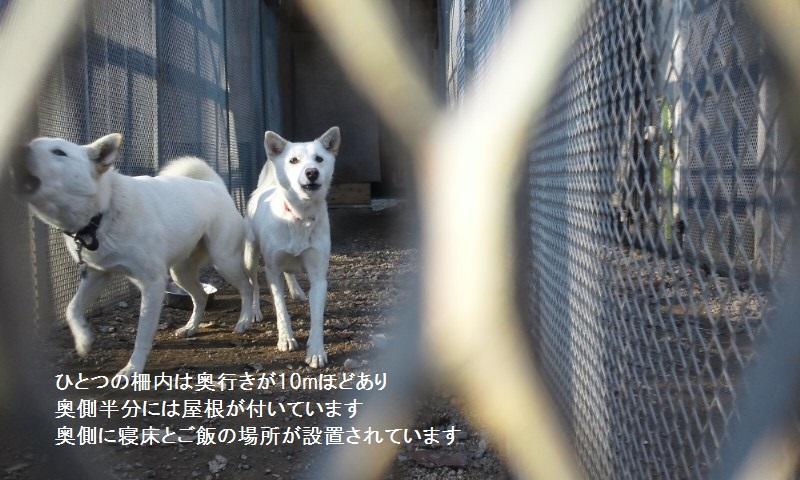栃木で暮らす終生飼育の犬猫たち_f0242002_0492129.jpg