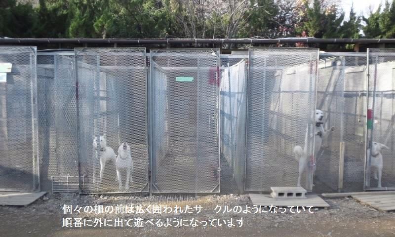 栃木で暮らす終生飼育の犬猫たち_f0242002_05004.jpg