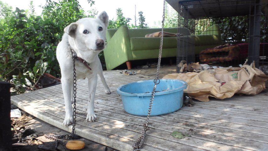 栃木で暮らす終生飼育の犬猫たち_f0242002_0503322.jpg