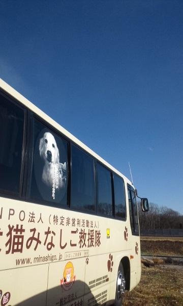 栃木で暮らす終生飼育の犬猫たち_f0242002_051464.jpg