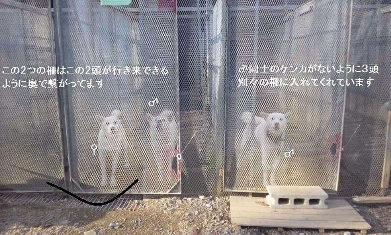栃木で暮らす終生飼育の犬猫たち_f0242002_115377.jpg