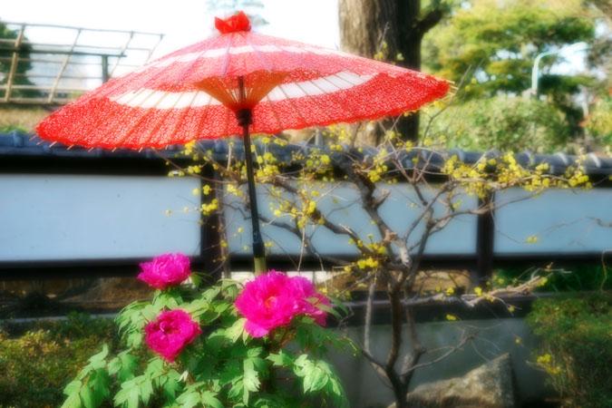 初春の上野東照宮の冬牡丹2_a0263109_1054038.jpg
