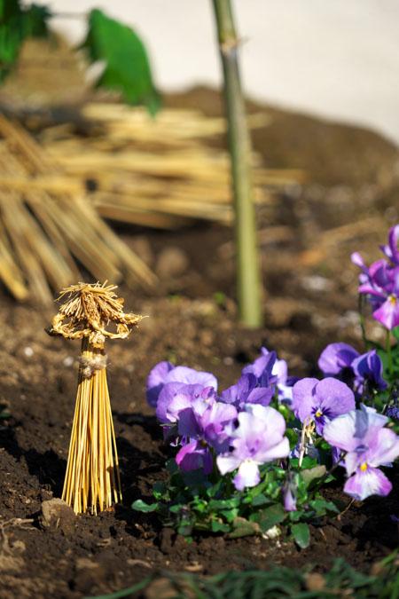 初春の上野東照宮の冬牡丹2_a0263109_10541496.jpg