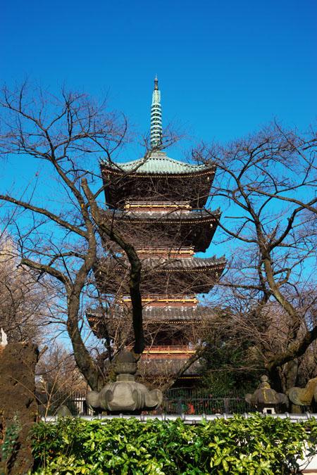 初春の上野東照宮の冬牡丹2_a0263109_10552927.jpg