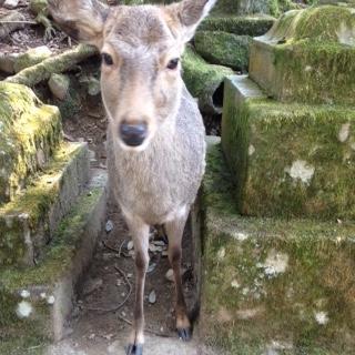 シカ・奈良公園_c0200314_16301177.jpg