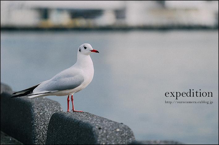 神戸遠征_f0100215_23432061.jpg