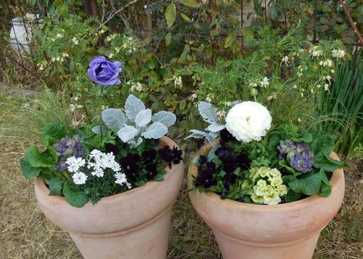 植物は春に向かって歩み始めました!_f0139333_23434081.jpg