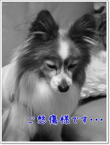 d0013149_00060713.jpg
