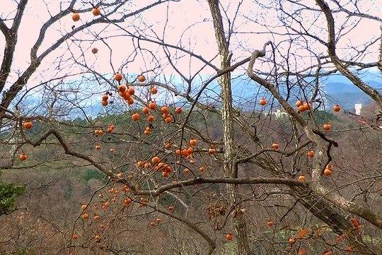 初山遊びで見つけた暖冬異変_b0102572_15143486.jpg