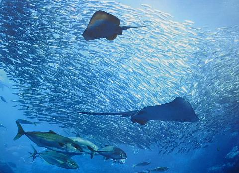 『二人の海』の江ノ島、ぶら歩き。_b0141773_13315770.jpg