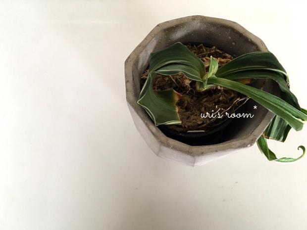 今度こそピッタリサイズの鉢をゲット!そして今年初のごはん公開。_a0341288_21404019.jpg