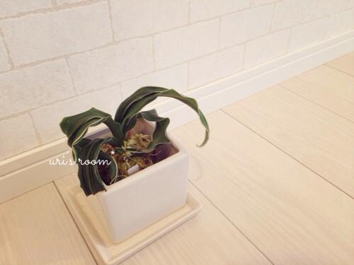 今度こそピッタリサイズの鉢をゲット!そして今年初のごはん公開。_a0341288_21550991.jpg