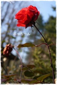 f0353990_14172213.jpg