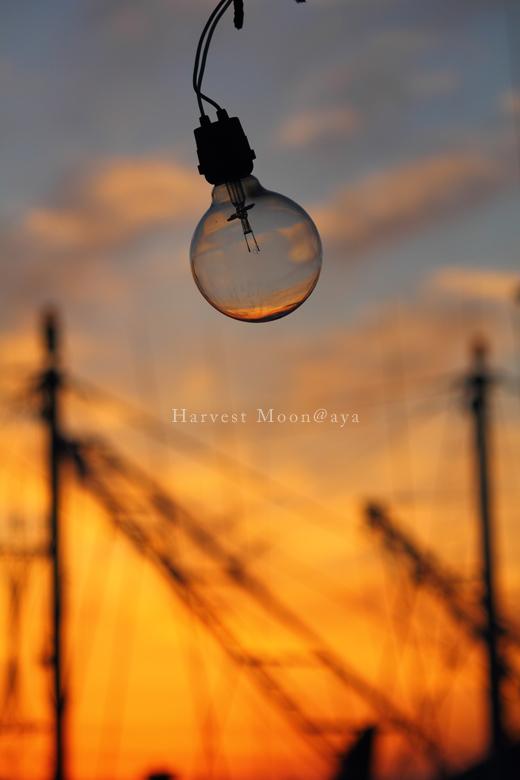電球の空_b0208495_00204297.jpg