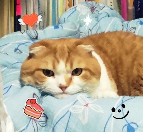 ジャガー13にエルダー猫がシンクロ!_b0213435_11500776.jpg