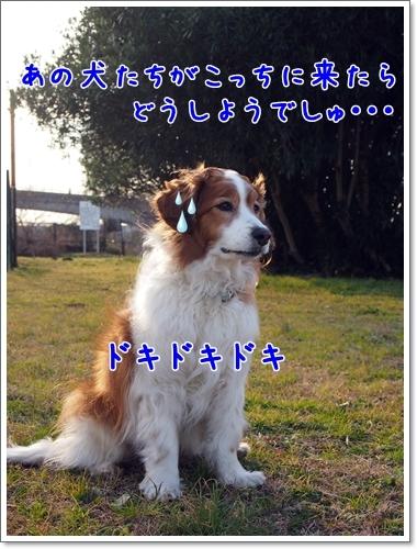 d0013149_23544361.jpg