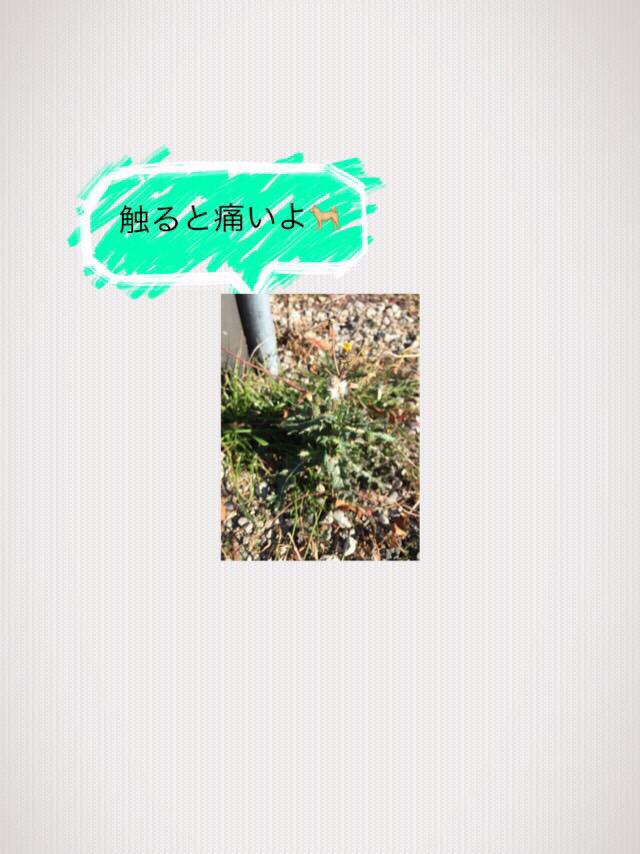 c0345972_22081802.jpg