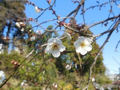 今更ですが、新春らしい写真をアップします_c0332682_21141013.jpg